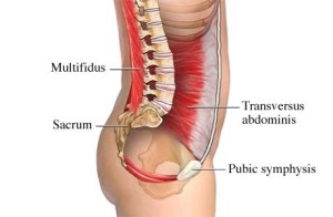 Core muscles and how they help support the spine